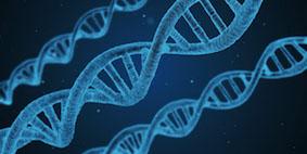 Modellhafte Darstellung der DNA
